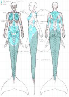 pettylebelle:punkrockluna:  tsarbombasticveryfantastic:  fucktonofanatomyreferences:  A delightful fuck-ton of mermaid anatomy references. A bit of a talk-through; Consider how natural swimming is to mermaids/men. When swimming, they often won't be utilizing their hands and arms to help them move forward, 'cause they're adept to using their tails and want to keep their arms free for multitasking. Of course there are situations where it's required, like when fighting currents and twisting…