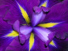 -BLEN: Beautiful Moment-  http://images2.layoutsparks.com/1/55738/iris-lovely-purple-flower.jpg
