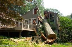 15 Best Tree Removal - How Not to Do It images in 2013