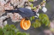 How to Make Homemade Suet | Suet Recipe - Birds & Blooms