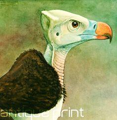 1930 White-headed Vulture Antique Print Louis by sofrenchvintage ~ETS #birds #vulture #vintageprint #vpgueteam #etsygifts