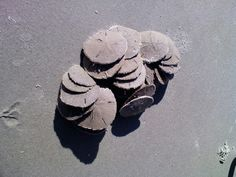 Tybee Island Tybee Island, Southern Charm, Beach Fun, My Happy Place, Savannah Chat, Sea Shells, Georgia, Gardens, Homes