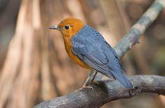 Anis Merah Macet bunyi merupakan salah satu jenis permasalahan yang dialami oleh penghobi burung saat merawat burung kicauan miliknya. Permasalahan ini tentunya menjadi permasalahan yang rumit dan …