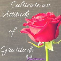 """An attitude of gratitude can open our eyes to the blessings offered to us on a daily basis by the universe, and by the people around us. It can open our hearts in ways that allow our spirituality to grow.""  http://www.angelmessenger.net/blog/cultivate-an-attitude-of-gratitude"