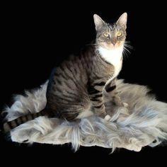 Cat Bed Sheepfriendly Cruelty Free Wool Fleece Felted