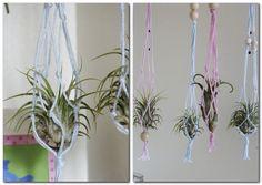 Tillandsien als kleine Blumenampeln zum aufhängen - DIY