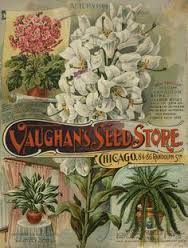 antique seed catalogue - Google Search
