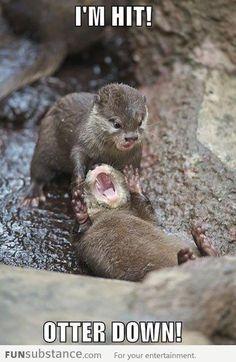 @Lindsay Burdan otters!!!