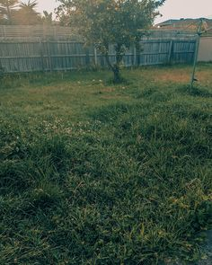 Don't stress too much, it does not help knowing your grass is going to keep growing no matter what. Unless, you hire Good Mowing to get the task done once and for all.until you need it again in a month. Grass, Home And Garden, Australia, Grasses, Herb