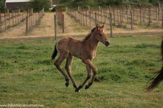 Horse Stock654 by BelleMisty