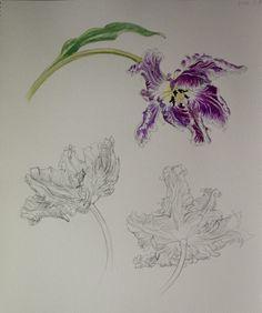Pencil Drawing and Watercolor I Chisako Fukuyama