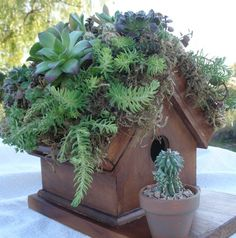 Living roof bird house! Great idea to add a flower pot to the front.