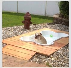 Inground doggie swimming pool! I really think Pooka needs one of these along a lounge chair.