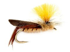 Top 10 Flies for Fall on Colorado Freestone Rivers - Orvis News