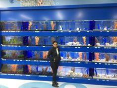 Terrarium Shop, Aquarium Shop, Reptile Room, Fish Breeding, Drip System, Pet Shop, Reptiles, Pets, American