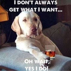 Oh wait....yes, yes he does. Share if your dog is spoiled rotten and loving it! #dogs #doglovers