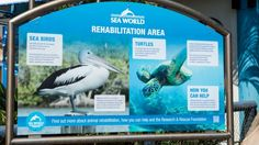 "Sea World has earned a reputation for its rescue and rehabilitation work and its funding of marine research, but critics say such projects are a ""fig leaf"". Aqua park or prison? The great divide over Sea World's captive dolphins"