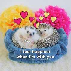 i'm back from japan and it was awesome! i went to both a cat cafe and a hedgehog cafe and both were so cute and amazing ah. Luv Letter, Flirty Memes, Stupid Love, Cute Love Memes, Snapchat Stickers, Crush Memes, Lovey Dovey, Relationship Memes, First Love