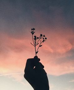 33 Trendy Ideas For Flowers Photography Pictures Roses Hand Photography, Creative Photography, Photography Flowers, Tumblr Aesthetic Photography, Tumblr Photography Instagram, Beauty Photography, Photography Ideas, Aesthetic Backgrounds, Aesthetic Wallpapers