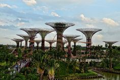 "The ""SUPER TREES"" in SINGAPORE"