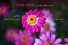 """Isaiah """"Arise shine for thy light is come and the glory of the Lord is risen upon thee. Isaiah 60 1, Arise And Shine, Flower Places, Scripture Pictures, He Is Coming, Thank You Jesus, King Of Kings, Bible Verses, Lord"""
