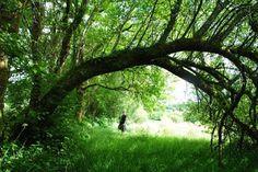 Kruidwis: kruidenstage wandeling Pont ar Gorret