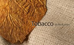 Tobacco Absolute This absolute is obtained from the tobacco leaf and has a sweet, slightly smoky, rich aroma reminiscent of fine pipe tobacco. It adds natural depth and character to perfumes, especially masculine and Oriental blends.  It's very tenacious dark green substance that is solid at room temperature and requires special use instructions to blend. Blended with vanilla, neroli, and ambrette it takes on an intriguing, timeless, and perfectly unisex scent. Read more on…