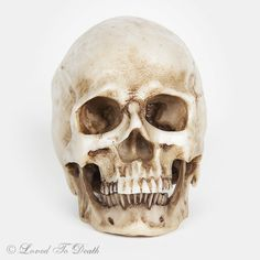 Loved To Death – Small Anatomical Resin Human Skull