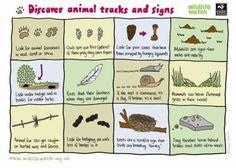 nature activity sheets