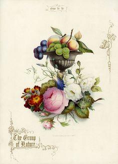 Jerrard Fruit & flower Prints 1852
