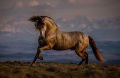 """4,870 Likes, 50 Comments - Katarzyna Okrzesik Photography (@katarzyna_photo_equine) on Instagram: """"Danzante - golden guardian of Tatra Mountains <3 @stajnia.neptuno.konie.pre © Katarzyna Okrzesik-…"""""""