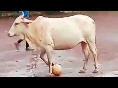 A cura para todos os viciados na internet Twitch Channel, Sporting, My Fb, Sem Internet, Cow, Blame, Cattle