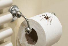 Kako da se zauvek oslobodite pau?ine u stanu: 9 trikova za borbu protiv paukova