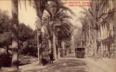 Paseo de las Palmeras en la Alameda