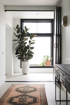 - House Plants - A Complete Guide to Lighting For Your Indoor Plants + Quiz ?Low Light, Bright Indirect, Full Sun, learn what plant lighting means and the plants that thrive in them! Understand the lighting conditions in YOUR home! Tropical House Plants, Tropical Houses, Rubber Plant, Rubber Tree, Pot Plante, Plant Lighting, Fiddle Leaf Fig, Bedroom Plants, Interior Plants