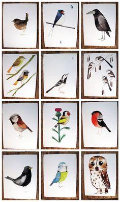 watercolor birds. matt sewell.