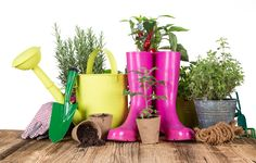 Daunted by the task of starting a new garden or gardening project? Read our 'Advice for the New Gardener' blog by expert Adam Woolcott for some handy tips. New gardener, beginning in the garden,