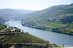 A visit to the Douro Valley in Portugal | by Ishay Govender-Ypma, Food and the Fabulous 10.04.2013 | Photo: douro wine valley