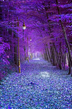 Autumn Alley, Trzcianka, Poland is part of Beautiful places Autumn Alley, Trzcianka, Poland - Landscape Wallpaper, Scenery Wallpaper, Beautiful Nature Wallpaper, Beautiful Landscapes, Beautiful World, Beautiful Places, Beautiful Fantasy Art, Natur Wallpaper, Landscape Photography