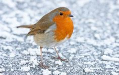 (via 12 Days of Christmas - day 1: Gifts for wildlife lovers | Countryfile.com)