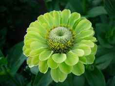 020 Flowers | Green