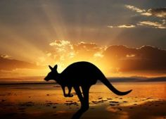 Kangaroo Island - The Galapagos of Australia Perth, Brisbane, Melbourne, Moving To Australia, Australia Travel, Animal Spirit Guides, Spirit Animal, Travel Tours, Travel Destinations