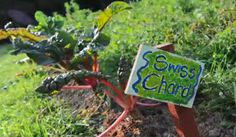 School Garden Grants - we will open another application window in Spring or Summer Poisonous Plants, Edible Plants, Science Biology, Life Science, Human Growth And Development, Childhood Obesity, Photosynthesis, Biomes, Life Cycles