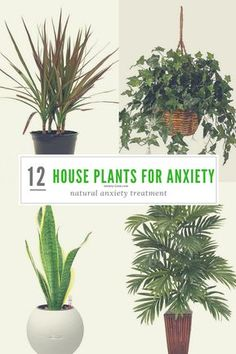- 12 Most Powerful House Plants for Anxiety and Stress Natural anxiety treatment, anxiety tips, anxiety tools to alleviate anxious symptoms. House plants for anxiety are the best way to clean the air and your mind. Natural Treatment For Anxiety, Natural Anxiety Relief, Natural Anxiety Remedies, Stress Relief, Treatments For Anxiety, Natural Stress Relievers, Inside Plants, Cool Plants, Good Plants For Indoors