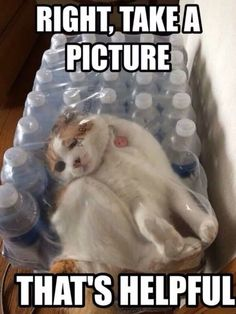 Cat Gets Stuck in a Pack of Bottled Water  Check more at http://dummiesoftheyear.com/cat-stuck-bottle-water/