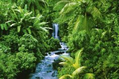 Rainforest (Waterfall) Art Poster Print Posters at AllPosters.com