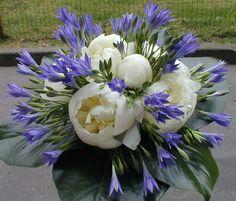 peonia blu - Cerca con Google