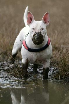What fun - hope you like bathing Muddy Bully.