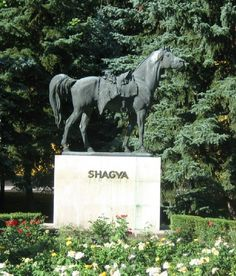 shagya arabian | Statue of Shagya at Babolna 2 About Shagya Arabians