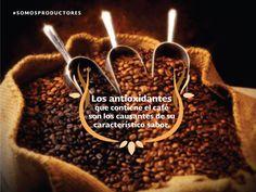 Los antioxidantes que contiene el café son los causantes de su característico sabor. SAGARPA SAGARPAMX #SOMOSPRODUCTORES